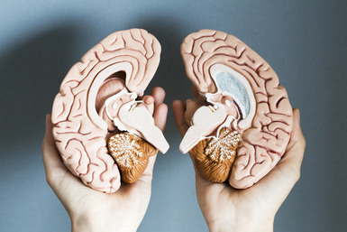 The Myth of Left Versus Right Brain Dominance Traits